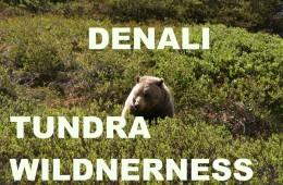Denali Tundra Wilderness Alaska